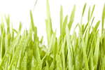 Weizengras - Wheat grass powder