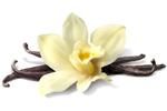 Vanille - Vanilla planifolia fruit
