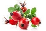 Hagebutten - Rosa Canina Fruit Extract
