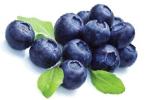 Heidelbeere, Blaubeere - Vaccinium Myrtillus Fruit Extract