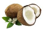 Kokospalmenöl - Cocos Nucifera Oil