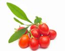 Gojibeere - Lycium Barbarum Fruit Extract