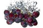 Weinrebe, Trauben-Extrakt - Vitis Vinifera (Grape) Fruit Extract