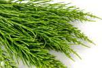 (Acker)schachtelhalm; Zinnkraut - Equisetum Arvense Extract