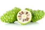 Noni Extrakt des Nonibaumes - Morinda Citrifolia Fruit Extract