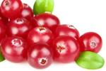 Preiselbeere - Vaccinium Vitis-Idaea Fruit Extract